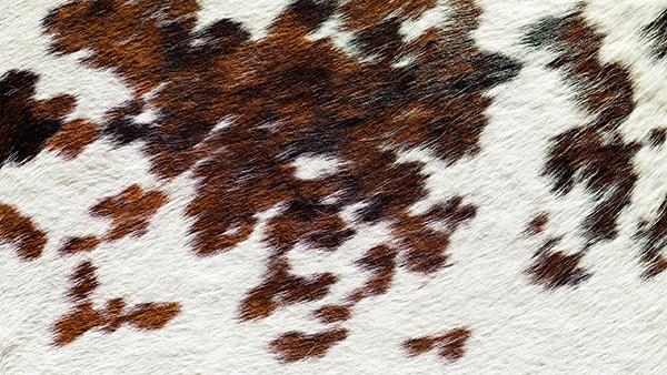 Fabricante de piel normando